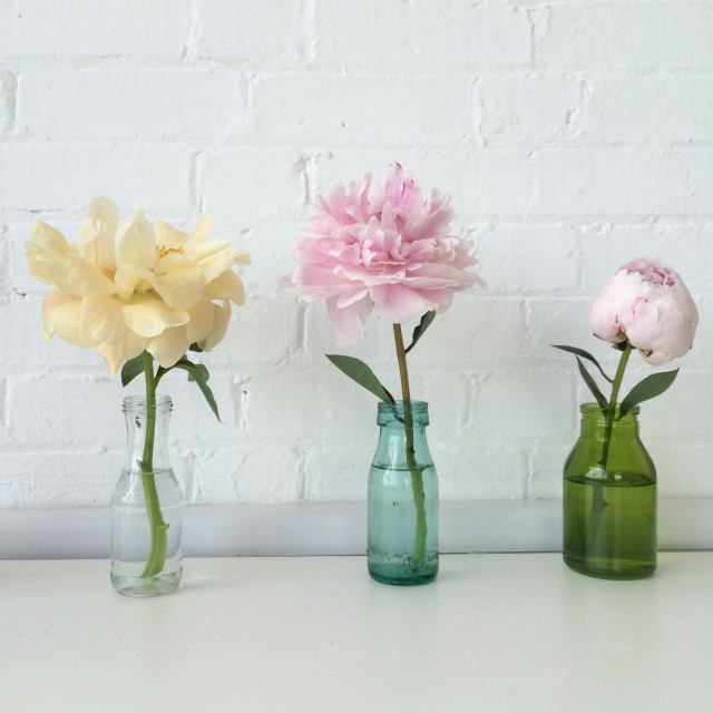 Peonies at Emily Quinton's Makelight studio.